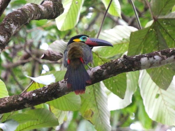 Birds of Suriname