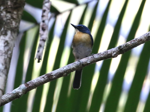 Birds of Philippines