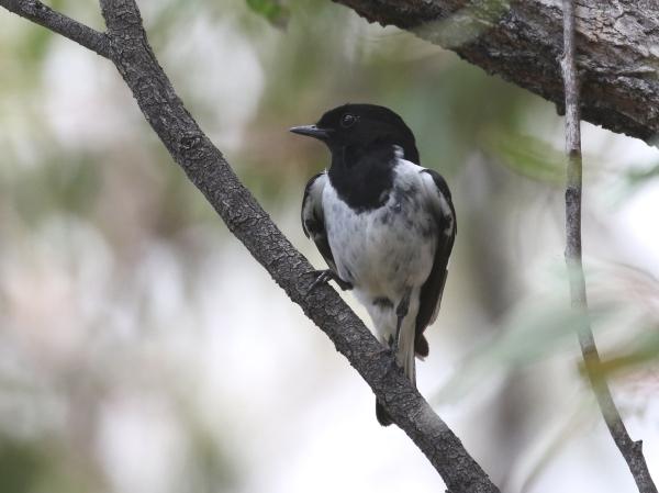 Birds of New South Wales, Australia