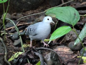 c1867BlueGround-Dove111206-201