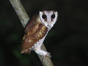 c2596OrientalBay-Owl100724-187