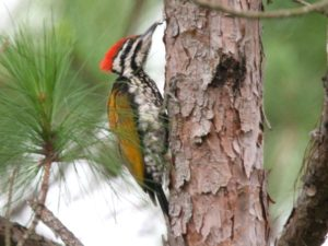 c4019CommonFlameback080707-084