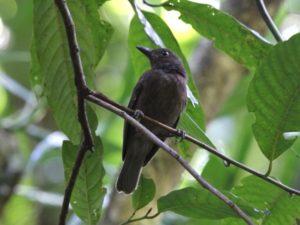 c7052Morningbird120423-264