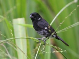 c9563VariableSeedeater050919-1